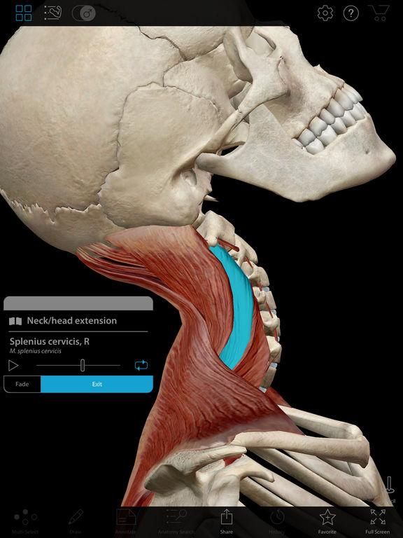 Muscle Premium - Human Anatomy, Kinesiology, Bones IPA ...