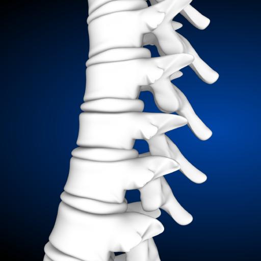 SpineDecide