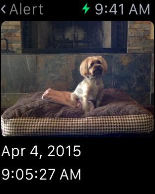 iCam - Webcam Video Streaming Screenshots