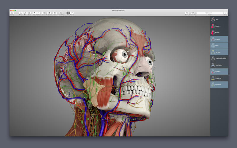 Essential Anatomy 505 3d Anatomy Modeling Engine Macos Apps